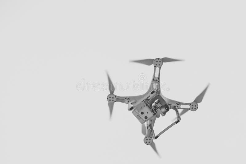 Trutnia latanie w powietrzu zdjęcia royalty free