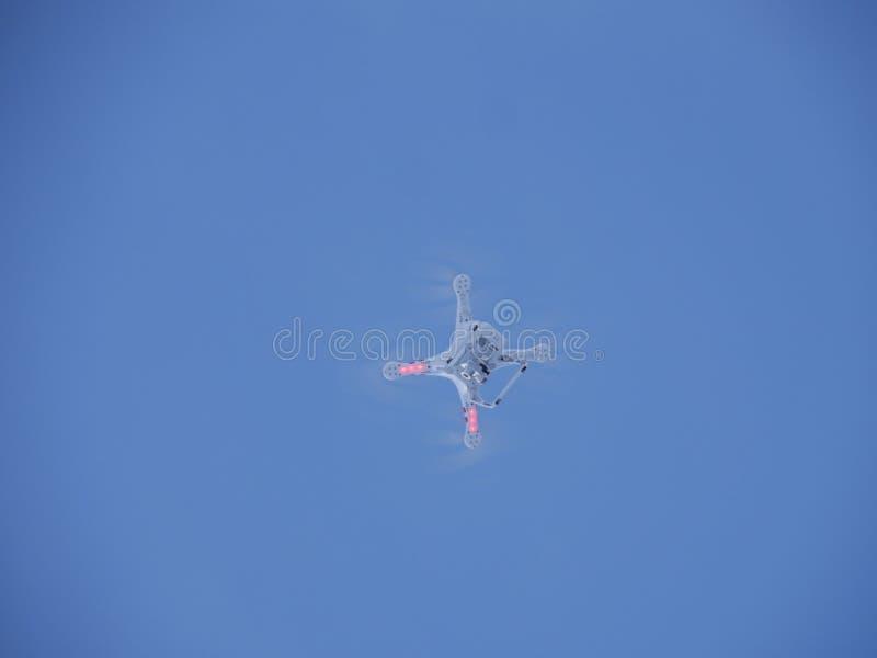 Trutnia latanie w zimie zdjęcia stock