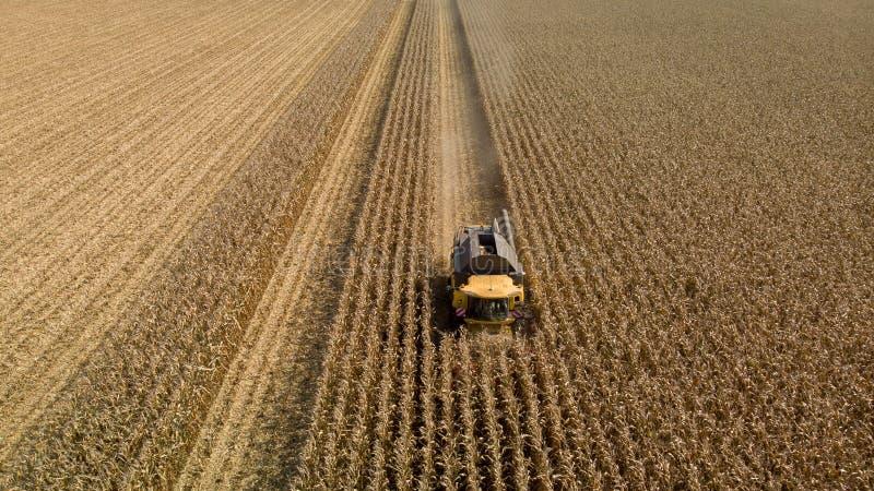 Trutnia widok kosi kukurydzanego pole żniwiarz obraz stock