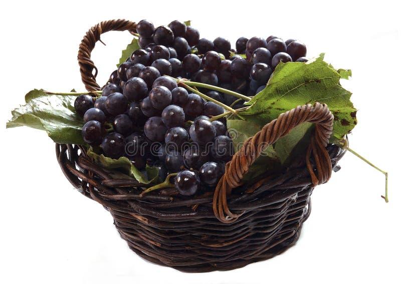trwają winogron zdjęcia royalty free