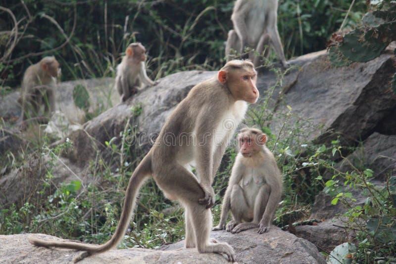 Trwanie małpa obraz royalty free