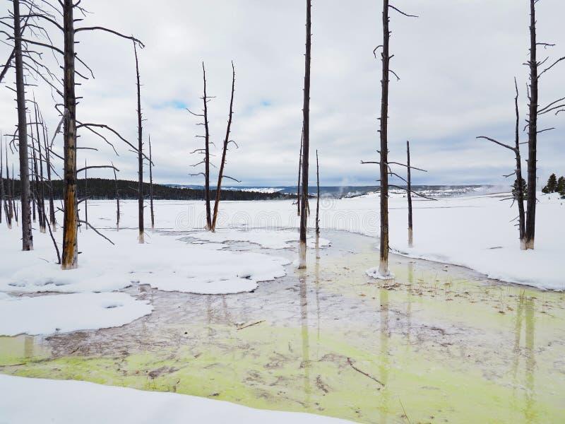 Trwanie Nie?ywi drzewa Zbli?aj? Silex wiosn? w Yellowstone parku narodowym w zimie obrazy royalty free