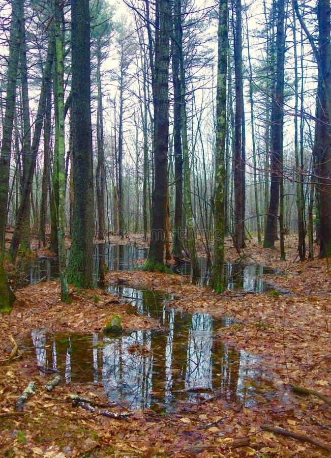 Trwanie woda w drewnach w Kwietniu w Maine, USA zdjęcia royalty free