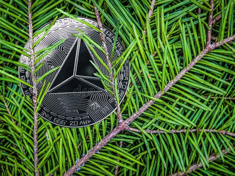 trx硬币在云杉分支的  圣诞节隐藏礼物 免版税库存照片