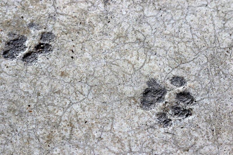 Tryck för kattfot torkade i cement på garagegolv royaltyfria bilder