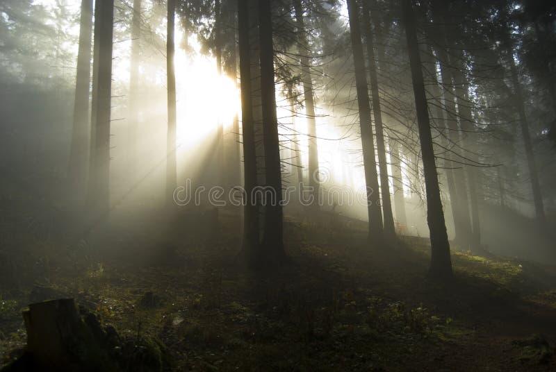 tryckvåglampa arkivfoto