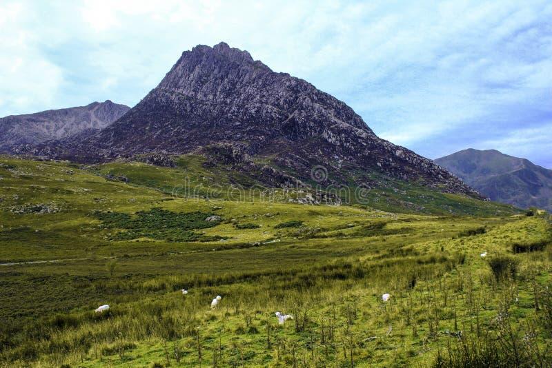 Tryfan著名峰顶在Snowdonia,北部威尔士,英国 免版税库存照片