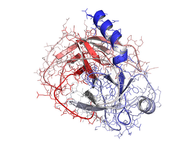 Trypsin enzyme molecule, chemical structure. Chemical structure of a human trypsin enzyme molecule. Trypsin is an enzyme that contributes to the digestion of royalty free illustration