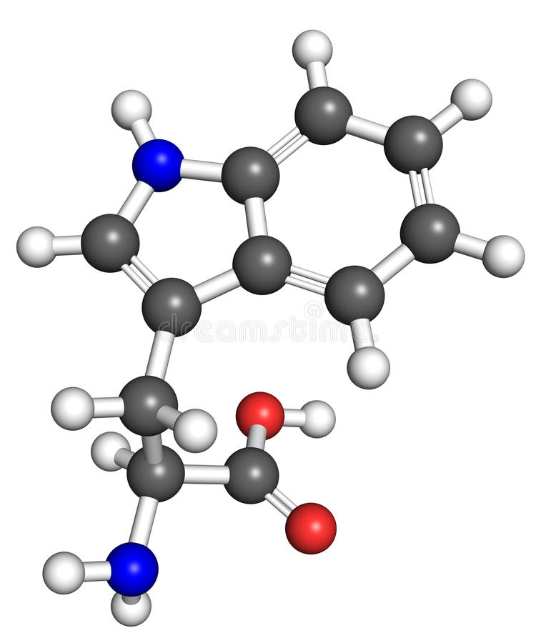 Tryptophanmolekyl vektor illustrationer