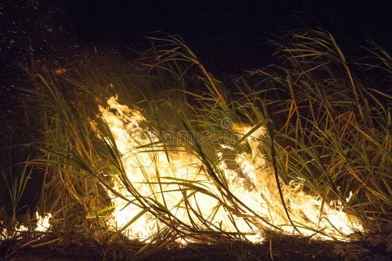 Trzcina cukrowa ogień zdjęcia royalty free