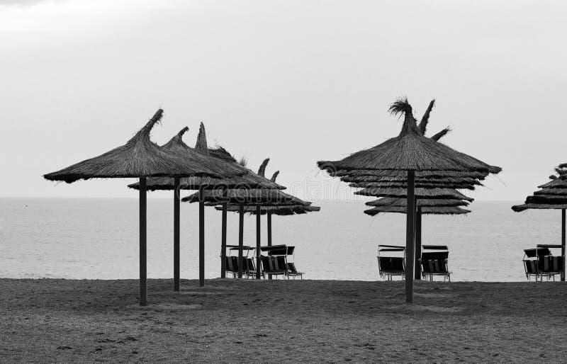 Trzcinowi parasole zdjęcie royalty free