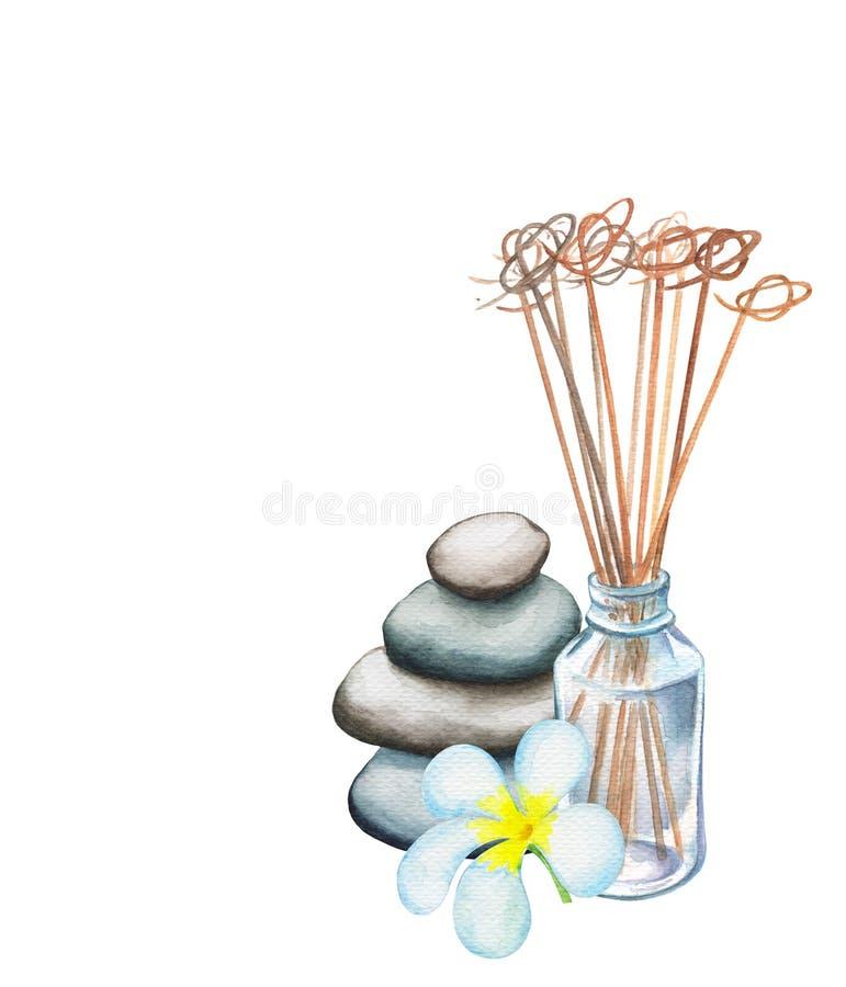 Trzcinowy dyfuzor, frangipani kwiat i otoczak akwareli basztowy rysunek na białym tle, royalty ilustracja