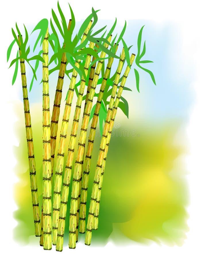 trzciny rośliny cukier ilustracja wektor