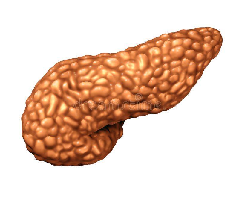 Trzustka ludzki organ ilustracji
