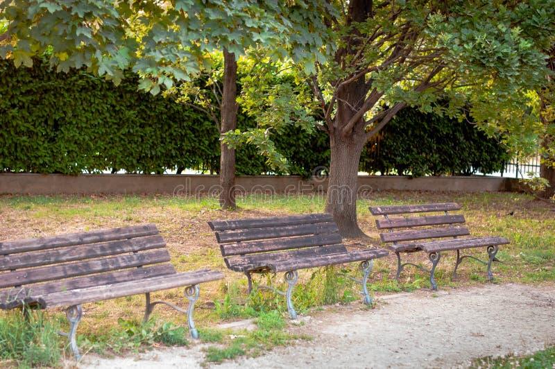 Trzy ławki pod drzewem w parku, lato obraz royalty free