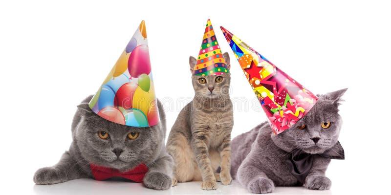 Trzy śmiesznego urodzinowego kota patrzeje zanudzający z kolorowymi nakrętkami obraz royalty free