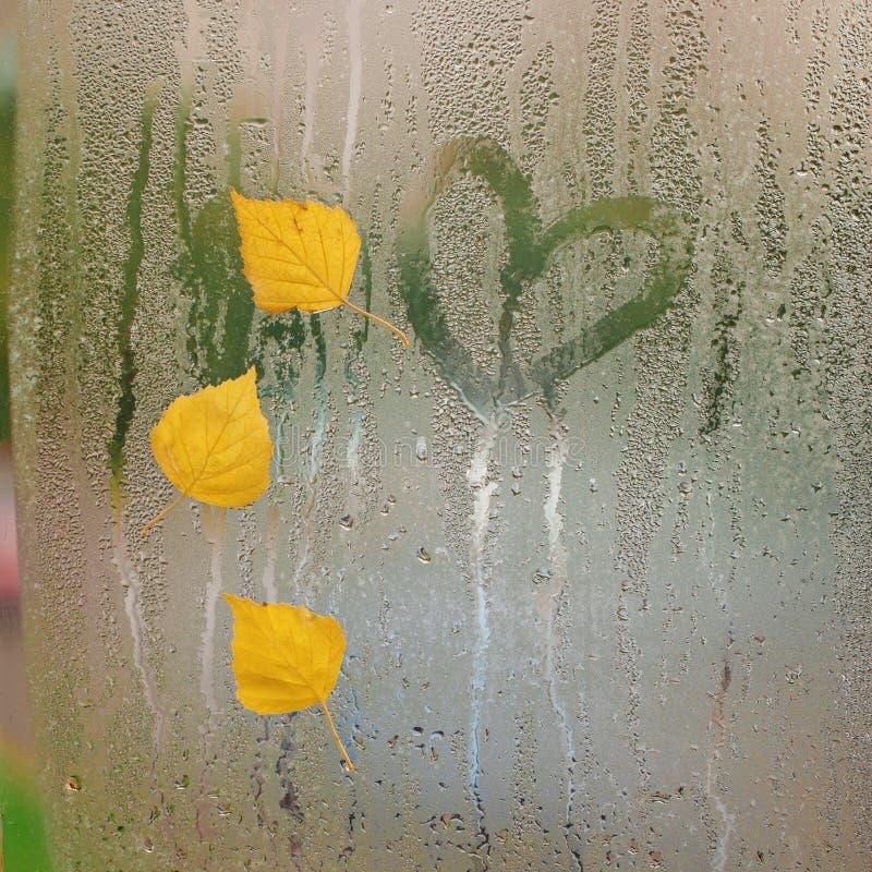 Trzy Żółtego jesień liścia z sercem na okno po deszczu Pojęcie jesieni nastrój zdjęcie royalty free