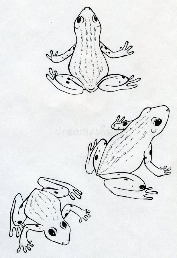 Trzy żaby ilustracji