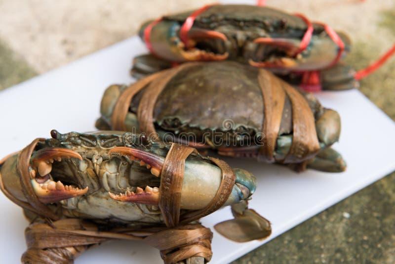 Trzy Żeńskiego Czarnego kraba przed gotować fotografia royalty free