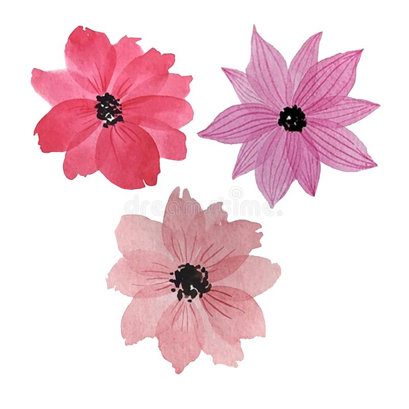 Trzy akwarela kwiatu royalty ilustracja