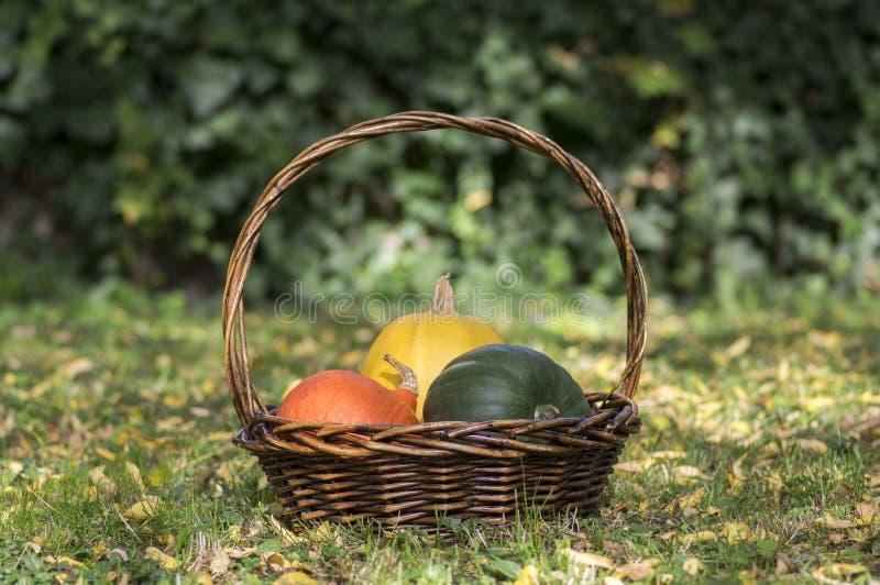 Trzy bani w łozinowym koszu, żółtej spaghetti bani, zielonej muszkatołowej bani i pomarańcze hokkaida bani, jesień liście obraz stock