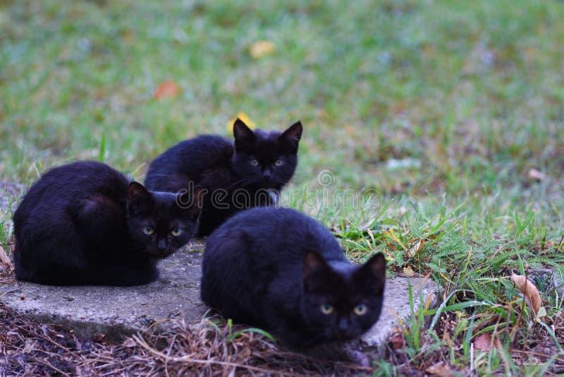 Trzy bezdomnego małego czarnego kota siedzą na mrozie i ulicie obraz royalty free