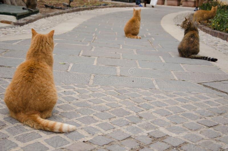 Trzy brown kota siedzi w to samo ustawiają obraz stock
