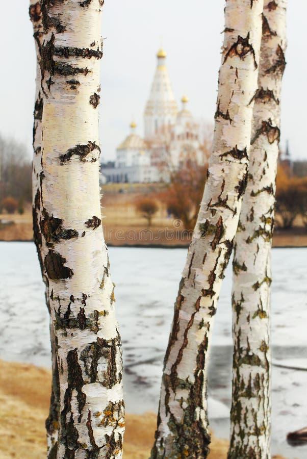 Trzy brzozy przegapia kościół fotografia stock