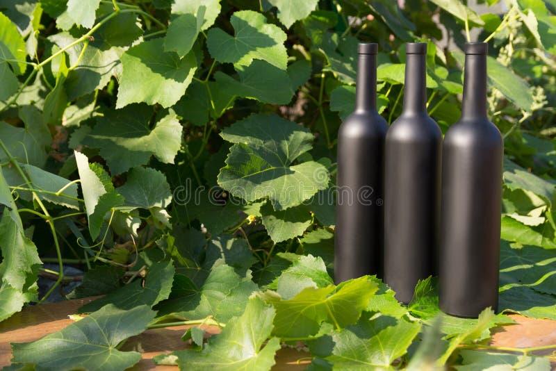 Trzy butelki wino stojaki przeciw zielonym liściom winnica ocet naturalny nap?j, intymni winnicy naturalny nap?j, obraz royalty free