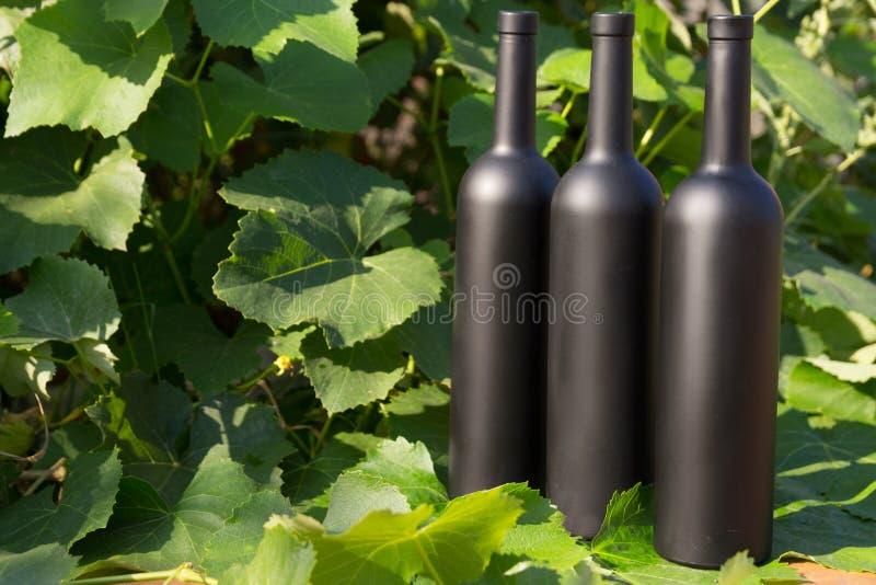 Trzy butelki wino stojaki przeciw zielonym li?ciom winnica ocet naturalny nap?j, intymni winnicy naturalny nap?j, zdjęcie stock