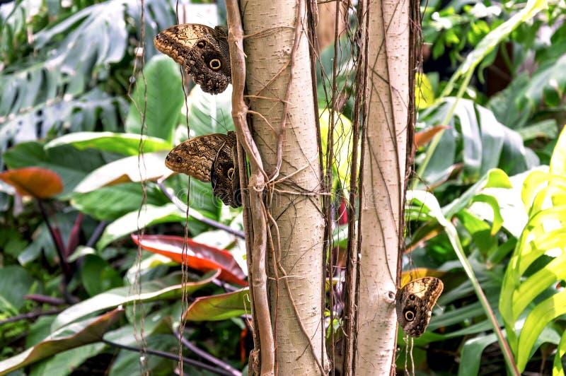 Trzy coloured cudownych motyle kłaść na bagażniku roślina zdjęcie royalty free