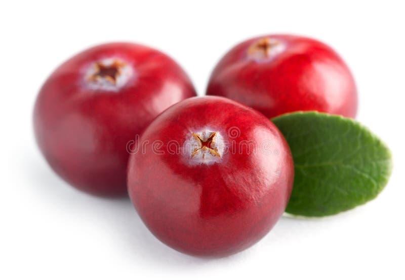 Trzy cranberry z liść obrazy stock