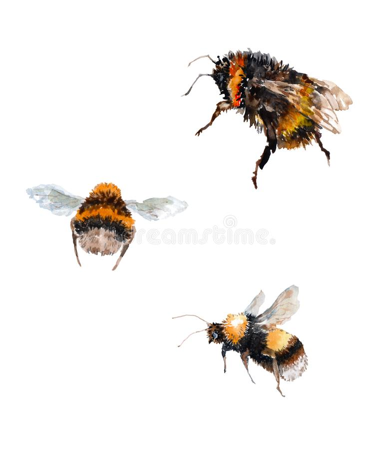 Trzy czarnego bumblebees z żółtymi lampasami Wierzch z fałdowymi skrzydłami, niski bumblebee z skrzydłami podnosił w górę Lewy bu ilustracji