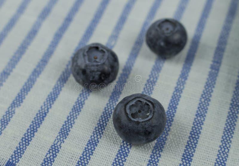 Trzy czarnej jagody jagody na pasiastej pielusze w górę Świeżych jagod weganinu surowy jarosz Czarnej jagody Dzika jagoda obrazy royalty free