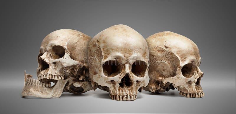 Trzy czaszka zdjęcie stock