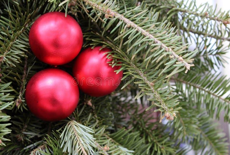 Download Trzy Czerwonego Ornamentu Na Sosnowych Gałąź Zdjęcie Stock - Obraz złożonej z igły, dekoracje: 28966400