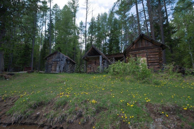 Trzy domu w zielonym lesie zdjęcie royalty free