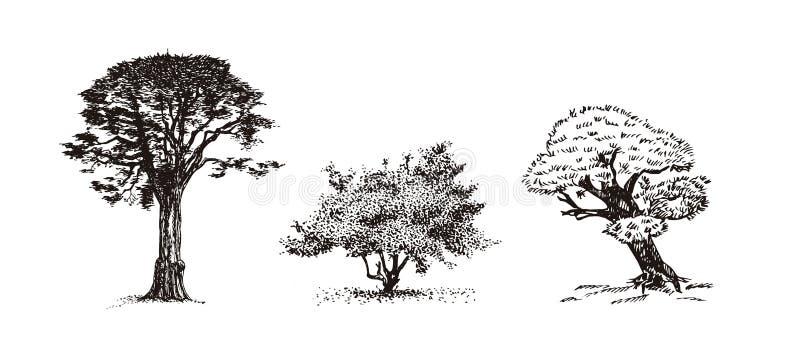 Trzy drzew wektoru ilustracja ilustracji