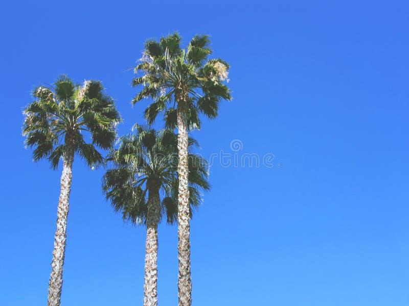 Trzy drzewka palmowego przeciw niebieskiemu niebu Rocznik poczta przetwarzająca Mody, podróży, lata, urlopowego i tropikalnego pl zdjęcia stock