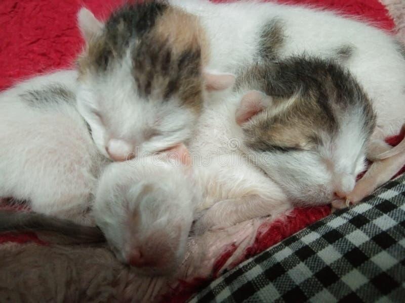 Trzy dziecko kotów uroczy spać fotografia royalty free