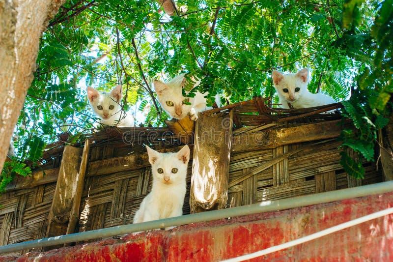 Trzy figlarki i kot na dachowym spojrzenie puszku fotografia stock