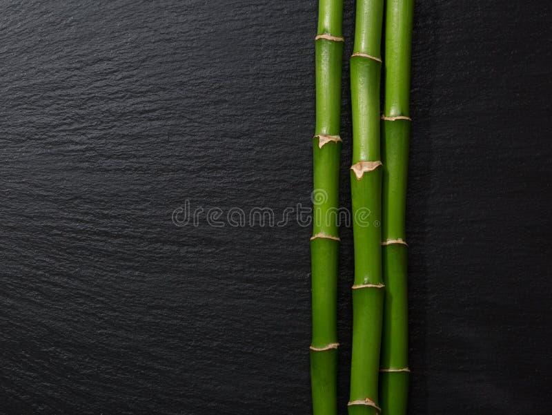 Trzy gałąź bambus zdjęcie royalty free