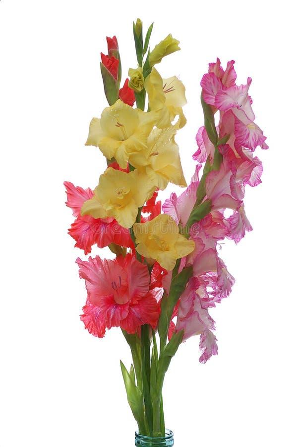 trzy gladioluses fotografia stock