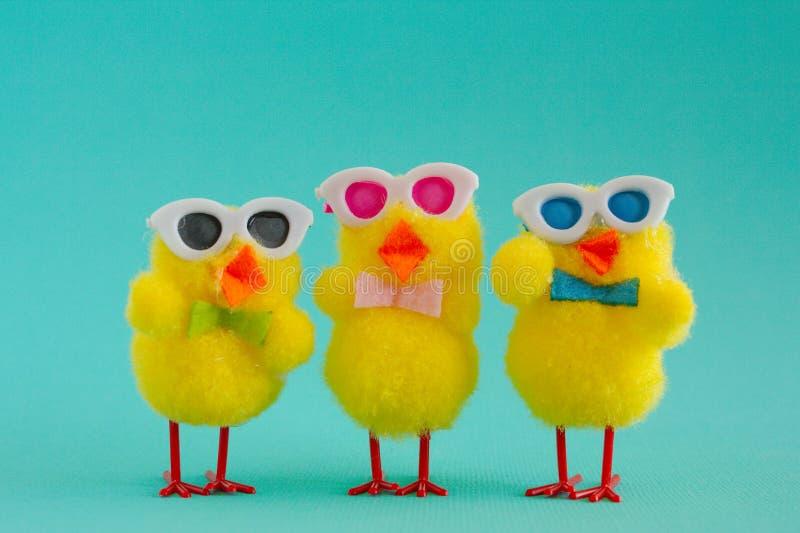 Trzy Groovy kurczątka jest ubranym okulary przeciwsłonecznych na Aqua tle obraz royalty free