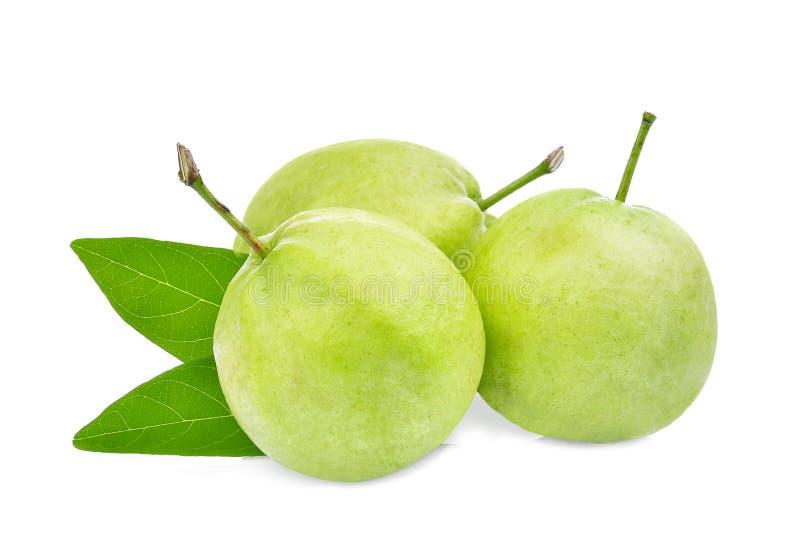 Trzy guava cała owoc z zielonym liściem na bielu fotografia royalty free
