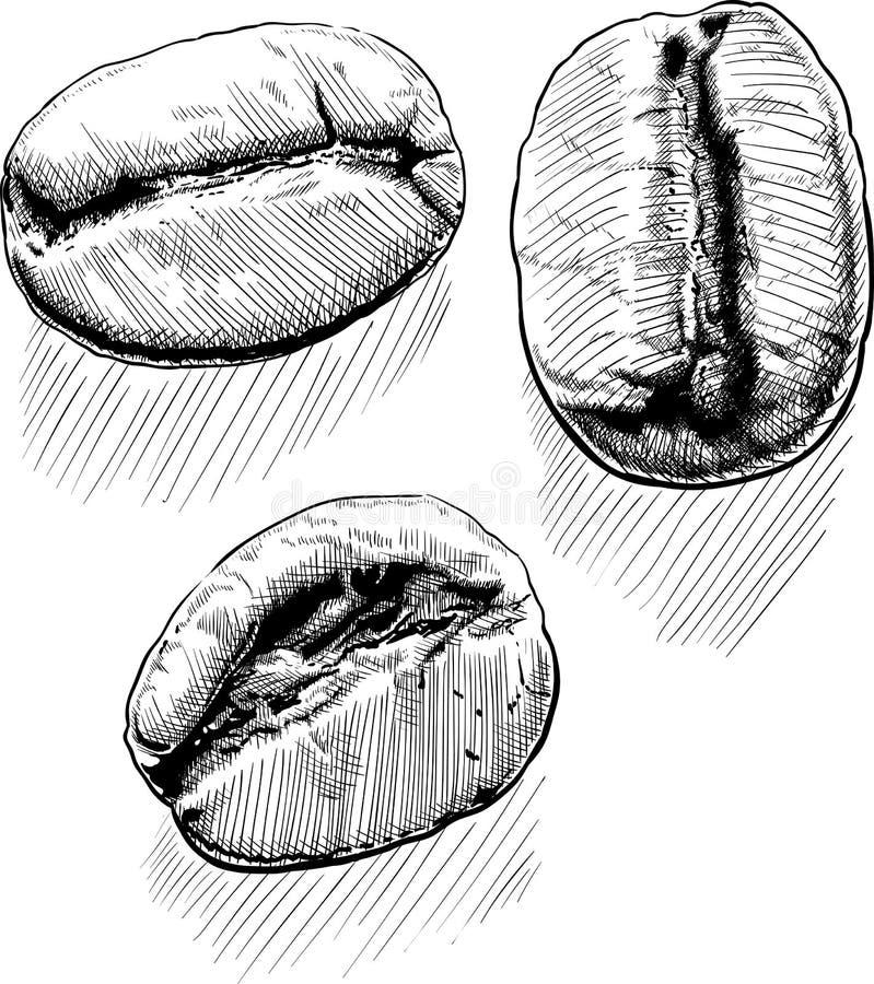 Trzy kawowej fasoli royalty ilustracja