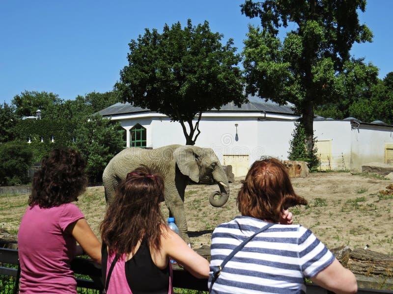 Trzy kobiety Patrzeje Ogromnego Pięknego słonia i Podziwia fotografia stock