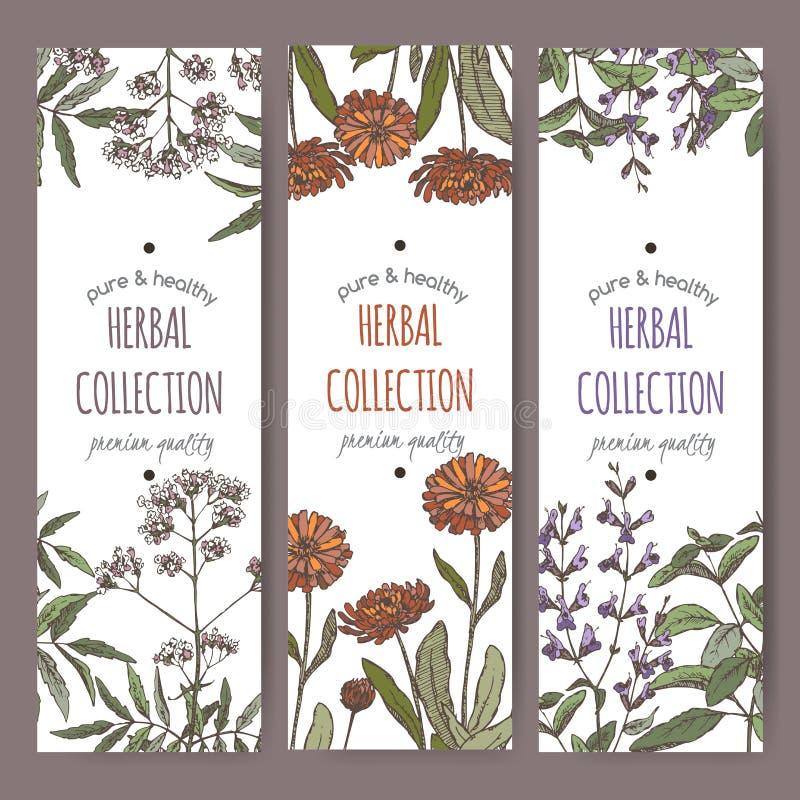 Trzy kolor ziołowej herbaty wektorowej etykietki z kozłekiem, calendula, mędrzec ilustracji