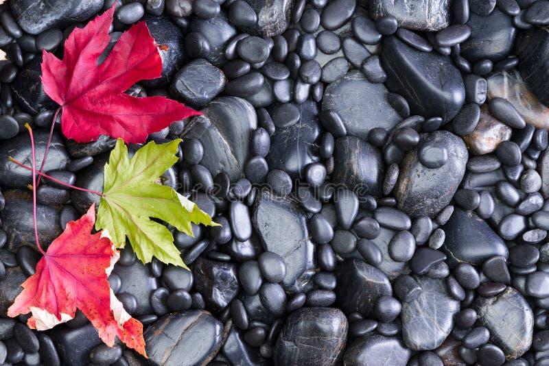 Trzy Konceptualnego liścia na Czarnych Rzecznych skałach fotografia stock