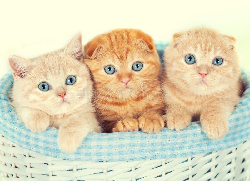 trzy kotki trochę obraz royalty free